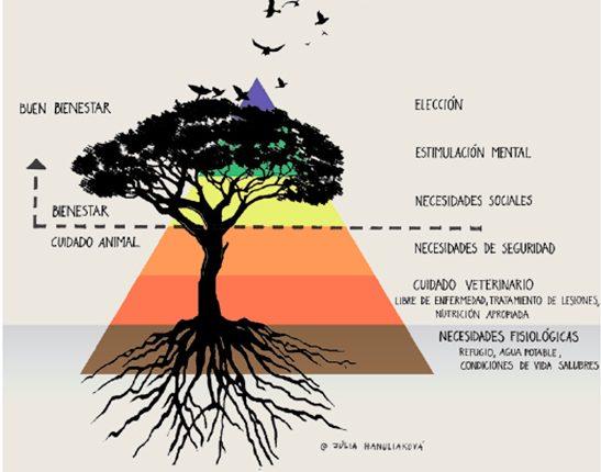 Resultado de imagen para piramide de maslow waza